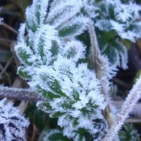 Nouveau coup de froid avec gelées en cette fin de semaine
