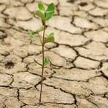 Allons-nous vers une sécheresse marquée dans certaines régions?